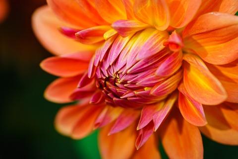 DSC Flowers-8779.jpg